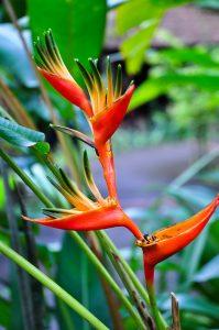 Épanouissement floral, 2016 Photographie numérique